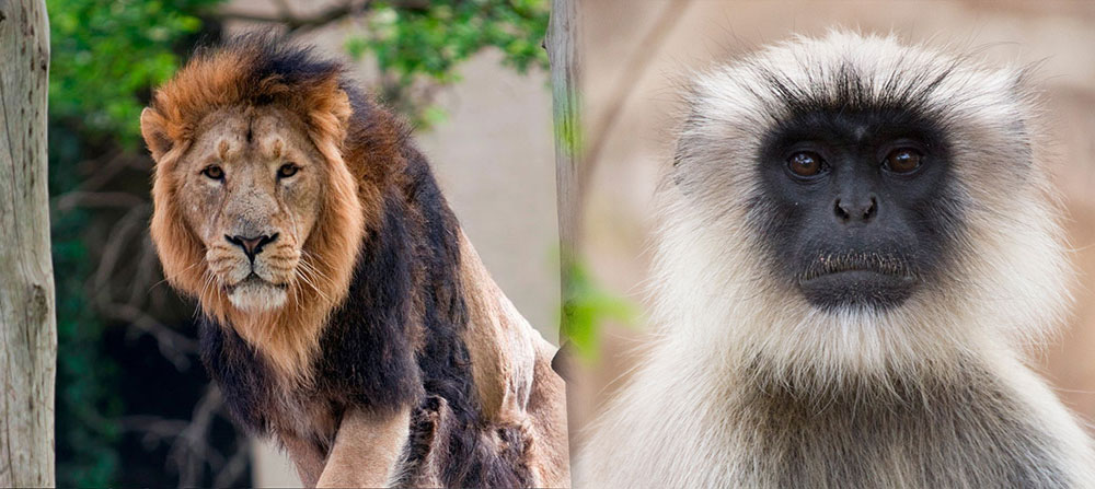 The Best UK Zoos Zoo Federation - 10 of the best most fascinating zoos in the world
